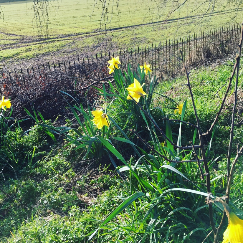 Sunshine, daffodils andlambs.